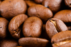 Full of coffee bean Royalty Free Stock Photography
