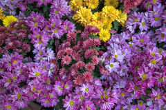 Full color flower. On the ground royalty free stock photos