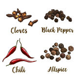 Full color realistic sketch illustration of allspice, cloves, black pepper and chili. Vector illustration Stock Image