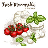 Full color realistic sketch illustration of mozzarella. With basil and cherry tomatoes, vector food illustration Stock Images