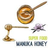 Full color super food hand drawn sketch. Manuka honey. Full color super food hand drawn sketch vector illustration Stock Photo