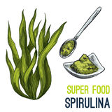 Full color super food hand drawn sketch. Spirulina. Full color super food hand drawn sketch vector illustration Stock Photos