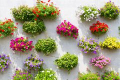 Full of colorful flowers on hanging basket Stock Photography
