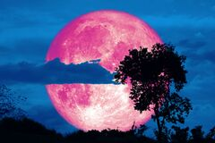 Free Full Crust Pink Moon And Silhouette Tree In The Field And Night Sky Stock Photography - 176131292