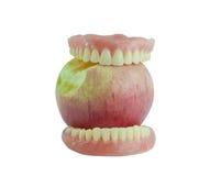 Full denture eat apple Stock Images