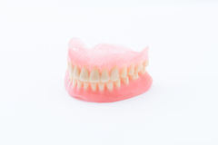 Full Denture Stock Image