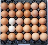 full eggs pack with different Royalty Free Stock Image