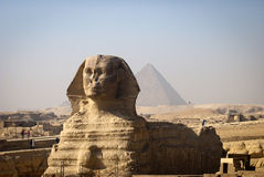 Full-face of Sphinx Royalty Free Stock Photo
