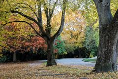 Colors of fall at the Volunteer Park, Seattle Washington royalty free stock images