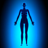 Full Female Body - Front View - Blue concept Stock Images