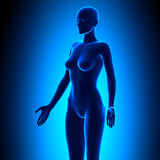 Full Female Body - Isometric View - Blue concept Stock Image
