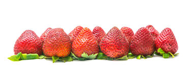 Full fledged red strawberry Stock Photos