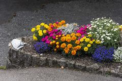 A full flower bed in sidewalk. A full flower bed, containing pink, yellow, blue and orange flowers in a sidewalk, Grindewald, Bern canton,Swiss Alps, Switzerland royalty free stock image
