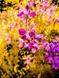 Full Hd flower wallpaper. Full flower wallpaper hdflower hdwallpaper royalty free stock photos