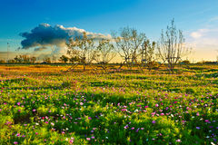 The full of flowers grassland Stock Photo