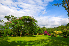 The full of flowers trees Stock Photo