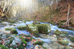 Full-flowing stream. Beautiful rapid river with mossy stones flowing through autumn forest Royalty Free Stock Images