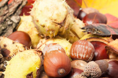Full frame of autumn decorations Royalty Free Stock Images