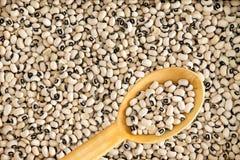 Full frame background of black-eyed beans Stock Images