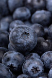 Full Frame Blueberry Royalty Free Stock Images