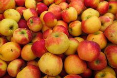 Full frame close up of pile red yellow apples wellant stock photos