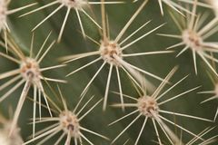 Full frame close up of prickly thorn of a green cactus. In diagonal lines royalty free stock photography