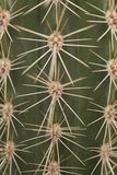 Full frame close up of prickly thorn of a green cactus in straigh lines in a vertical images stock photo