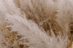 Full Frame Closeup the flowering hay grass.  Stock Images
