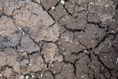Full frame of cracked dirt. Background of cracked and dried earth. Cloudy day. royalty free stock photography