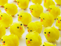 Full Frame Of Easter Chicks Royalty Free Stock Images