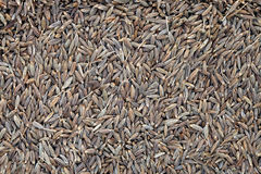 Full Frame Food Background: Whole Cumin Seeds Stock Photos