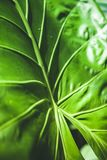 Full frame of green. Leaf texture stock photos