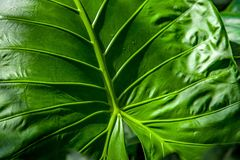 Full frame of green. Leaf texture royalty free stock photo