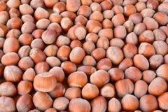 Full frame of hazelnuts Stock Image