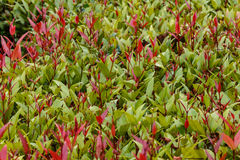 Full frame hedge background Stock Images