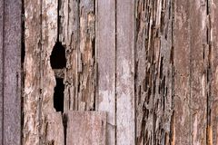 Full frame image of a damage wooden house wall because of a termites problem. Concept of nature, pests and wood background royalty free stock photos
