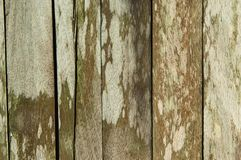 Old wood flooring. Full frame image of old wood flooring on the mold and moss stock images