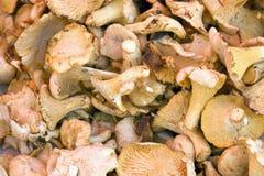 Full frame mushroom background Royalty Free Stock Images