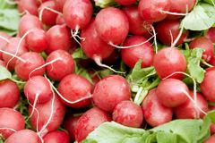 Full frame radish background. Full frame background with lots of raw fresh radish and some leaves Stock Photos
