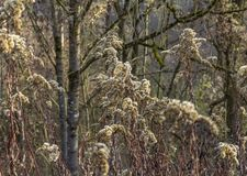 Sere plant detail. Full frame sere plant detail at autumn time royalty free stock images