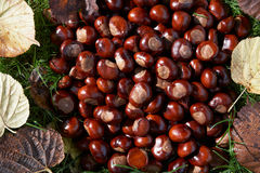 Full Frame Shot Of Conkers Stock Photo