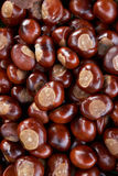 Full Frame Shot Of Conkers Stock Photography