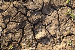 Full Frame Shot Of Cracked dirty land. Background of cracked and dried earth. royalty free stock photography