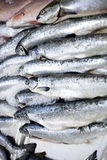 Full frame shot of freshly caught fishes Royalty Free Stock Photos