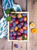 Full Frame Shot of Fruits and Tree Royalty Free Stock Photography