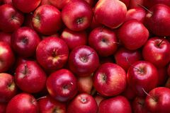 Free Full Frame Shot Of Red Apples Royalty Free Stock Images - 173258009