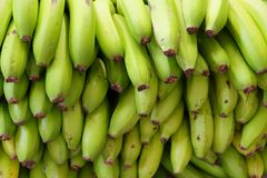 Full frame shot of ripe bananas. Full frame shot of ripe, green yellow bananas. Portuguese island of Madeira stock photos