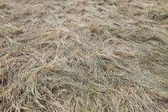 Full frame shot of straw Stock Photography
