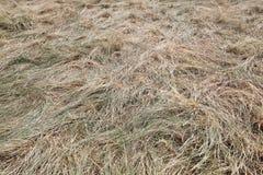 Full frame shot of straw Stock Image