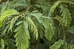 Full frame of some fern leaves. Vivid green. Leves detail Stock Photography